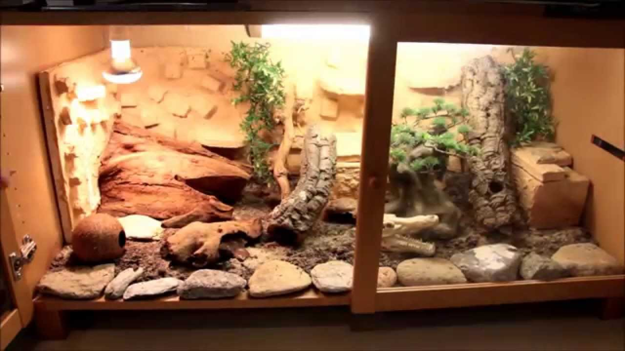 fiche elevage gecko leopard