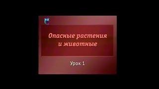 Биология. Урок 1. Опасные растения Средней полосы России. Часть 1