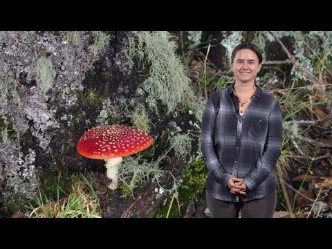 Anne Pringle (U. Wi.) 1: Introduction to Fungi