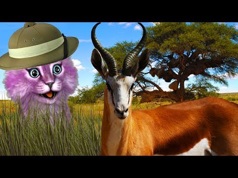 КТО МЕНЯ СЪЕЛ?! ДИКАЯ САВАННА В РОБЛОКС! Roblox Wild Savanna