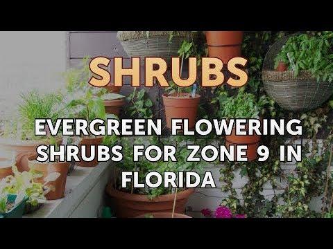 Evergreen Flowering Shrubs For Zone 9 In Florida Youtube