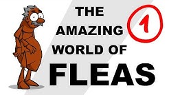 The Amazing World of Fleas - Plain and Simple (Part 1)
