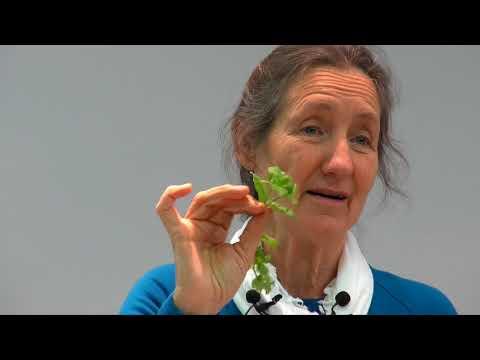 Barbara O'Neill - Part 11: Herbs