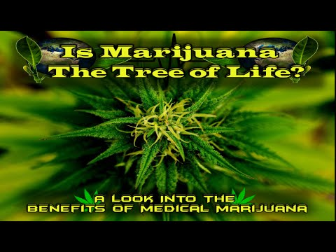 Marijuana Documentary; Is Marijuana The Cure For Cancer And Other Diseases?
