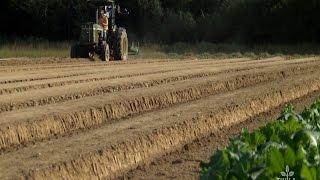 Next Generation —Luckett Farms