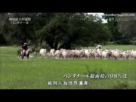 [Cantonese] Brazil world heritage site :: Pantanal Conservation Area 潘塔奈尔保护区