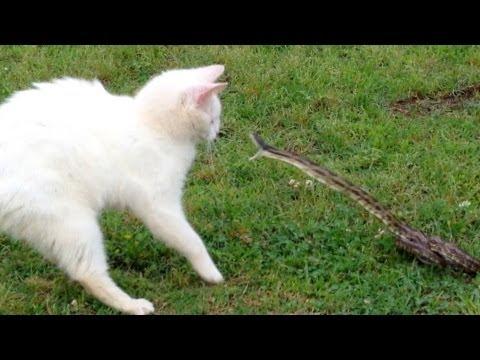 Snake vs Cat - Mossy Oak