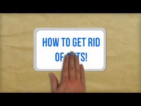 How to Get Rid of Ants Naturally | Best Tips for Getting Rid of Ants in Your Kitchen