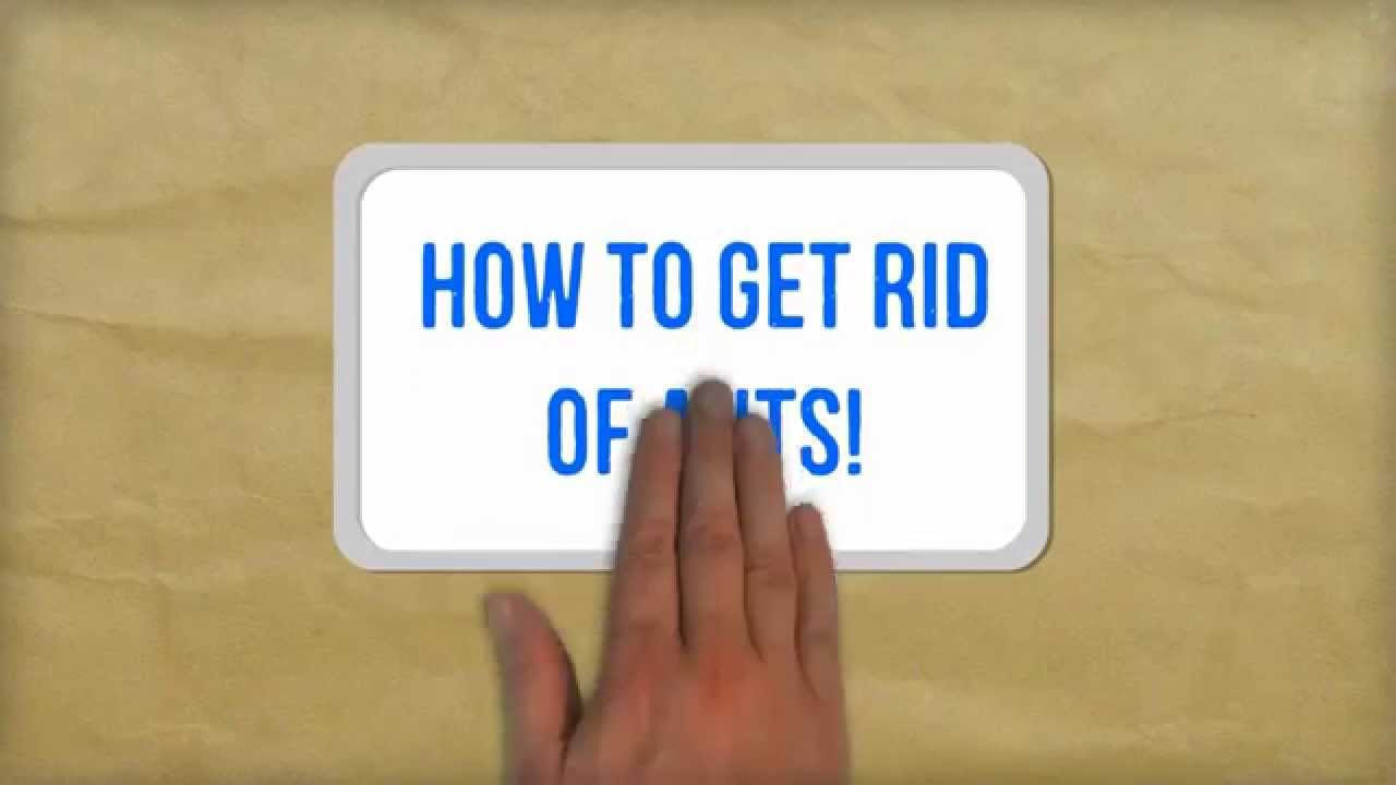 How To Get Rid Of Ants Naturally Best Tips For Getting Rid Of Ants In Your Kitchen Youtube