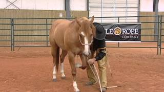 Horse Training - Proper Technique to Laying Your Horse Down