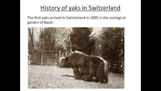 Gambar cover Yaks in Switzerland