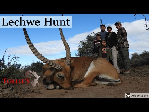 Hunting In Africa |  Lechwe Hunt At Tollie's African Safaris