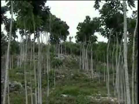 documental jose maria morelos quintana roo.mp4 - 2006