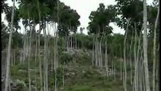 documental jose maria morelos quintana roo.mp4 - 2006