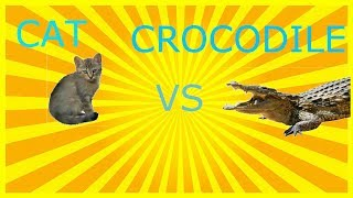 Cat sim online:top 3 ways to kill the crocodile