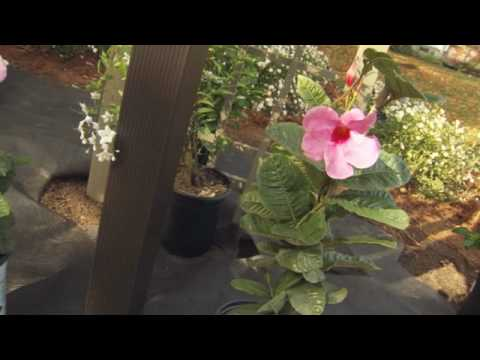 How To Plant Around A Mailbox Youtube