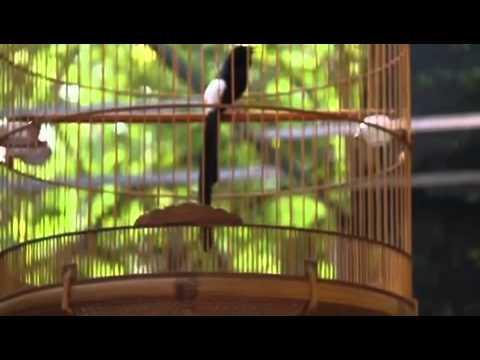 Chim chích choè lửa duoi 22 chơi vip