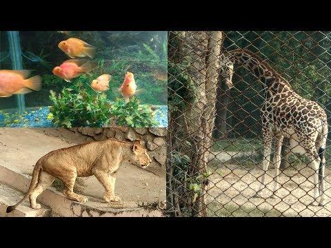 A Day At Lucknow Zoo | Leopard, Lion, Giraffe, Deer, Hukku All In HD