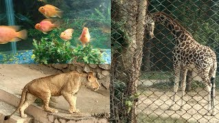 A Day at Lucknow Zoo | Leopard, Lion, Giraffe, Deer, Hukku All in HD