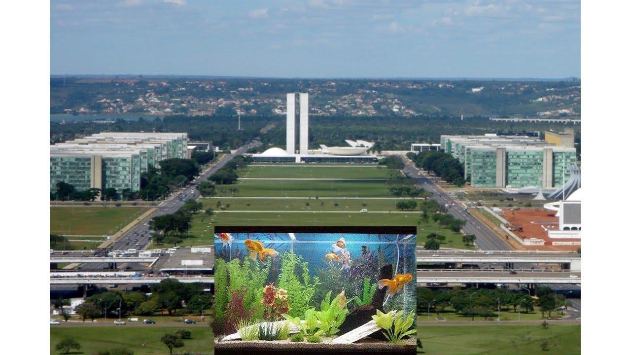 Minhas Impressões Sobre o Aquarismo de Brasília
