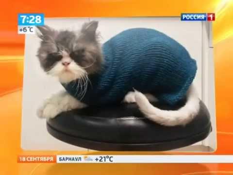 Кошки и котята британской короткошерстной харьков. На доске объявлений olx. Ua легко и быстро можно купить котенка породы британская. Продажа кошек и котят британской короткошерстной харьков. Британцы. Животные » кошки. 700 грн. Харьков, холодногорский. Вчера 09:33. В избранные.