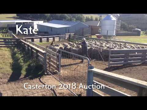 KATE - For Sale Casterton 2018 Working Dog Auction LOT 29