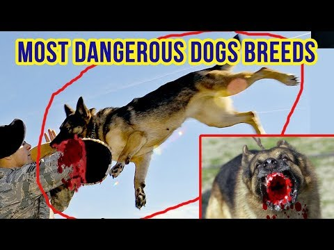 Top 10 MOST DANGEROUS DOGS BREEDS IN THE WORLD