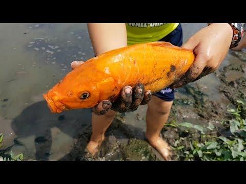 Trò Chơi Đi Bắt Cá Dưới Ao ❤ ChiChi ToysReview TV ❤ Đồ Chơi Trẻ Em Baby Song Fish