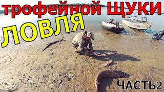 Осенний ЖОР ТРОФЕЙНОЙ ЩУКИ Рыбалка на спиннинг и троллинг на реке сентябрь 2021 Рыбак54