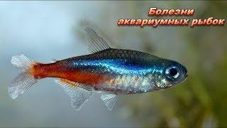 Аквариумные рыбки. Болезни аквариумных рыбок