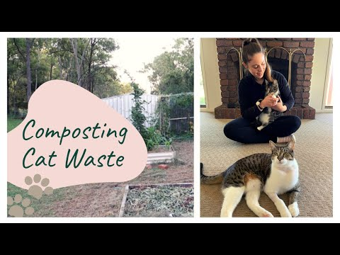 How to Compost Cat Waste and Cat Litter | Zero Waste