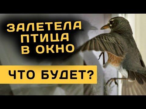 Залетела птица в окно. Священник Максим Каскун