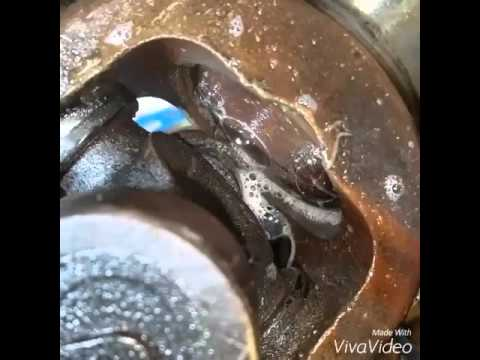 06 Duramax Yoke Seal Leak