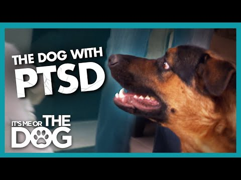 Can Dog's Tragic Past be Behind his Extreme Anxiety? | It's Me or the Dog