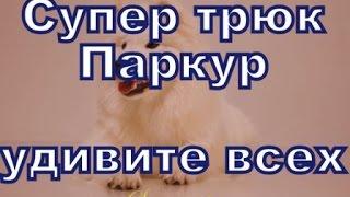 Паркур - обучение собаки -