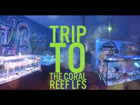 180G REEF SALTWATER AQUARIUM | LFS CORAL REEF STORE | NEW FRAGS