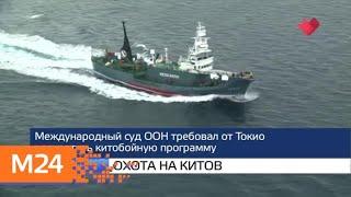 """""""Москва и мир"""": июльские изменения и охота на китов - Москва 24"""