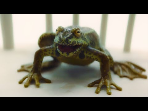 The Solitract is a Frog?! | It Takes You Away | Doctor Who