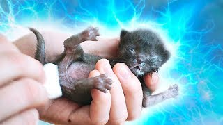Download Спасение новорожденного котенка   Saving the newborn kitten / SANI vlog Mp3 and Videos