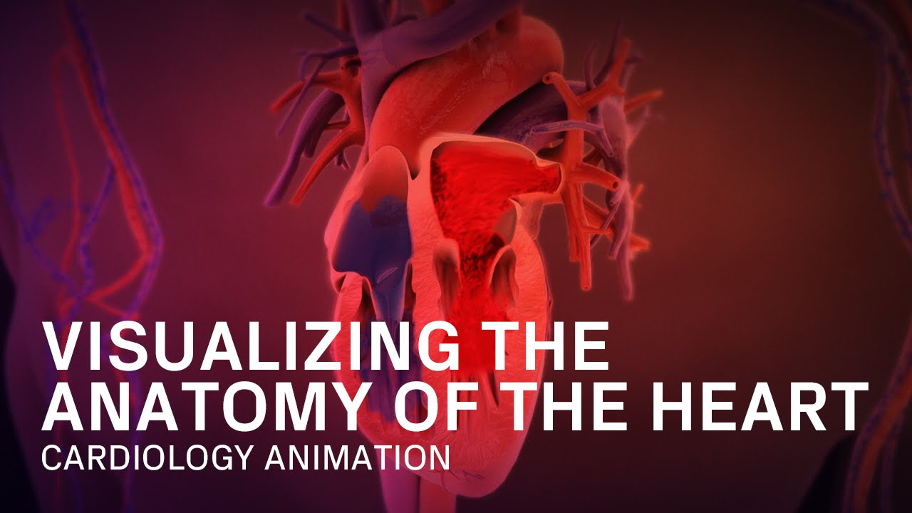 Anatomy Of The Heart Medical Animation Youtube