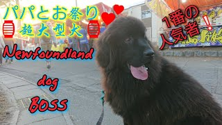 HELLO   超大型犬 NewfoundlanddogBOSS 人生2度目のお祭りに行ったよ♥ ...