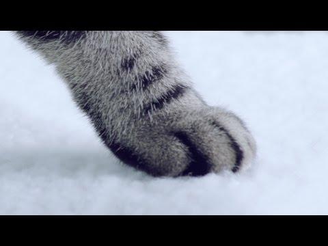 แมวของคุณ กระโดดได้แบบนี้หรือเปล่า?