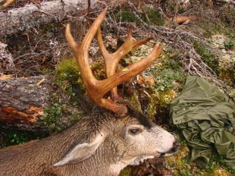 Howtohunt Com Blacktail Deer Hunting Youtube