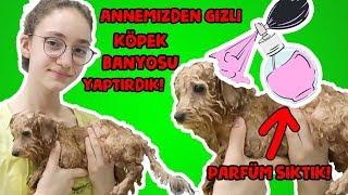 Annemden Gizli Köpeğimizi Yıkadık Bakım Yaptık Parfüm Sıktık! Yavru Köpek Banyosu! Bidünya Oyuncak🦄