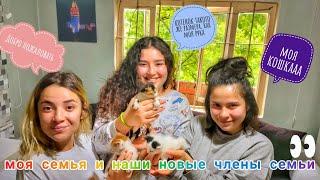 Я хочу, чтобы вы познакомились с моей семьей и крошечными кошками #KARANTİNAGÜNLERİNDENELERYAPILIR?