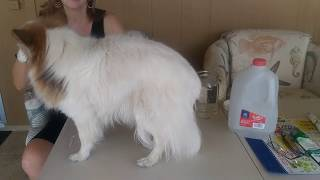 Cleaning Dog Tear Stains, Marion the Papillon and Ann Cassero