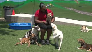 Just Happy Hounds Midtown Doggie Daycare Birmingham Virtual Tour 03-3