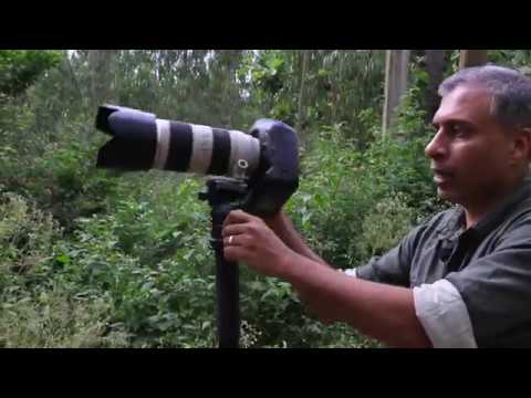 Photography Shooting Technique - Using A Monopod