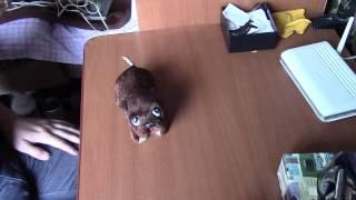 собака заводная из СССР