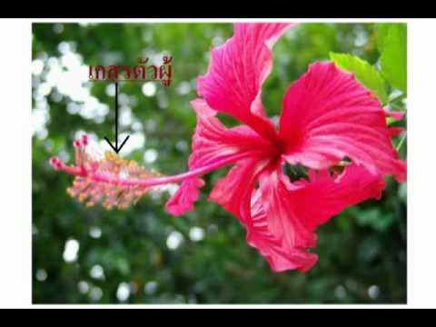 โครงสร้างของดอกไม้: 541128019